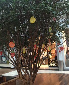 """Campanha """"Somos frutos das nossas atitudes"""" no shopping Crystal."""